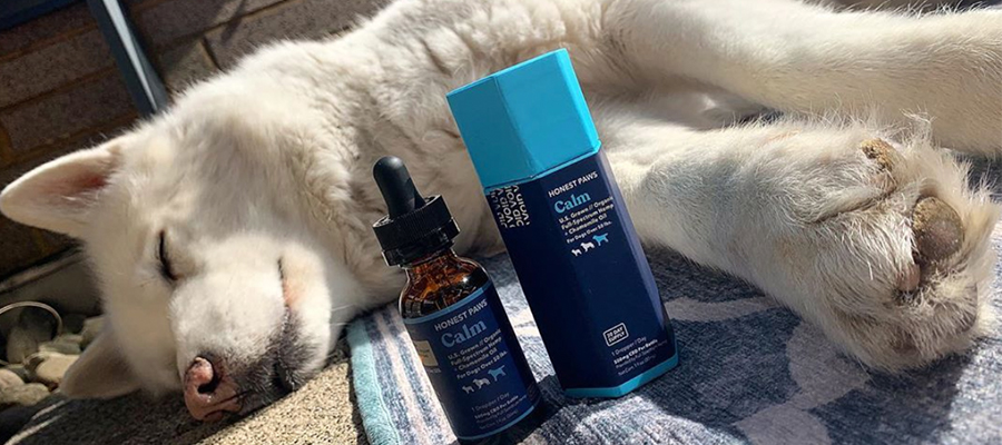 All You Need To Know About Cbd Oil For Dogs